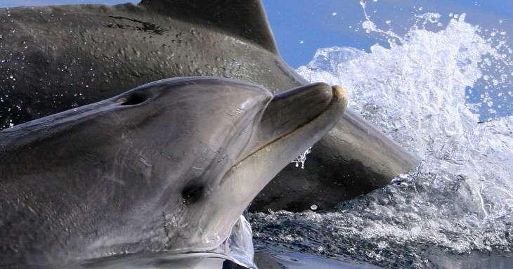 Necton Marine Research Society cerca Sponsor